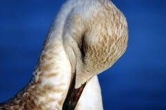 Gullig stående av seagullen Arkivfoto