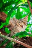 Gullig strimmig katt Kitten Relaxing royaltyfria bilder