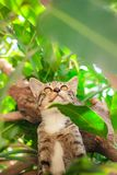 Gullig strimmig katt Kitten Relaxing royaltyfri foto