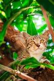 Gullig strimmig katt Kitten Relaxing royaltyfria foton