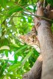 Gullig strimmig katt Kitten Relaxing arkivfoto