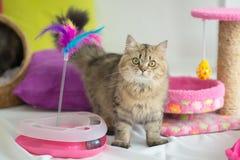 Gullig strimmig kattkatt med många leksaker Fotografering för Bildbyråer