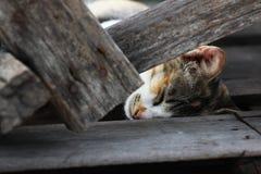 Gullig strimmig kattkatt som sover på de wood plankorna Royaltyfri Foto