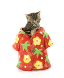 Gullig strimmig kattkattunge i hawaiansk skjorta Arkivfoto