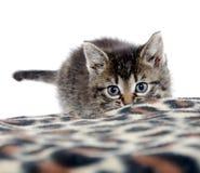 Gullig strimmig kattkattunge och filt Royaltyfri Bild