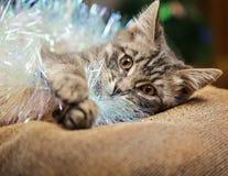 Gullig strimmig kattkattunge som spelar med julgarnering Arkivfoto