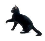gullig svart katt Royaltyfri Bild