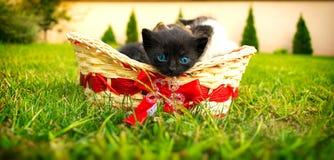 Gullig svart kattunge i korg Arkivbild
