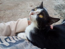 Gullig svart vit katt Royaltyfri Bild