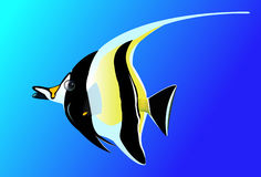 Gullig svartvit ängelfisk Royaltyfri Foto