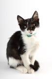 Gullig svartvit katt som bara sitter Royaltyfri Foto