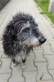 Gullig tillfällig hund Arkivbild