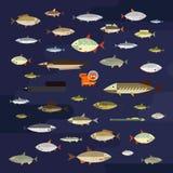 Gullig uppsättning för symboler för fiskvektorillustration stock illustrationer