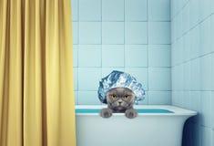 Gullig våt katt i badet Royaltyfria Bilder