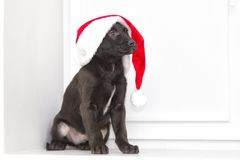 Gullig valp och julhatt av Santa Claus Arkivbilder