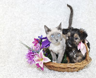Gullig valp och kattunge Royaltyfri Fotografi