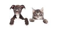 Gullig valp och Kitten Hanging Over White Banner Arkivfoton