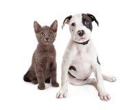 Gullig valp och Kitten Sitting Together Arkivbild