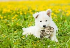 Gullig valp som kramar en kattunge på ett maskrosfält arkivfoto