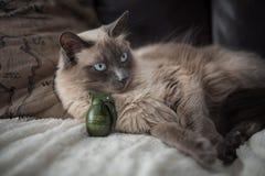 Gullig vit katt 3 Royaltyfria Foton