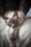 Gullig vit katt 6 Royaltyfri Fotografi