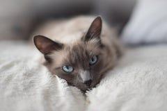 Gullig vit katt 7 Royaltyfria Foton