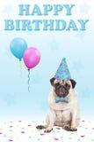 Gullig vresig vänd mot mopsvalphund med lycklig födelsedag för för för för partihatt, ballonger, konfettier och text, på blå bakg Royaltyfri Bild