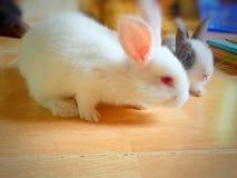 Gulliga älsklings- kaniner royaltyfria foton