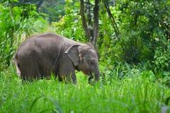 Gulliga asia behandla som ett barn elefanten i skog Arkivfoto