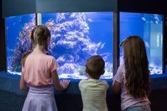 Gulliga barn som ser fiskbehållaren Fotografering för Bildbyråer