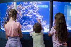 Gulliga barn som ser fiskbehållaren Arkivbild
