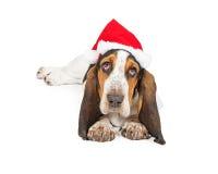 Gulliga Basset Hound Santa Dog Arkivbilder
