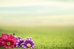 Gulliga blommor på lawn royaltyfria foton