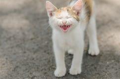 Gulliga Cat Meowing Arkivbilder