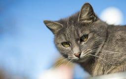 Gulliga Cat Portrait Blured Background Royaltyfri Fotografi