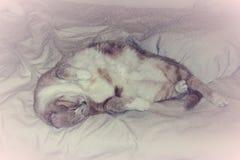 Gulliga Cat Sleepimg på en säng skissar Arkivfoto