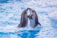 Gulliga delfin under ett anförande på delfinariet, Batumi, Geo Fotografering för Bildbyråer