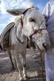 Gulliga djur som poserar för den nyfikna beeingen för kamera Fotografering för Bildbyråer