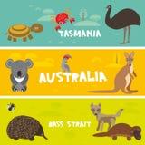 Gulliga djur ställde in, bakgrund Australien, Tasmani för ungar för krabban för dingo för kängurun för sköldpaddan för papegojan  Arkivbilder