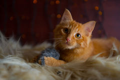 Gulliga fluffiga röda Kitten Playing med Toy Mouse Royaltyfri Foto