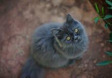 Gulliga Grey Kitty Selective Focus Arkivfoto