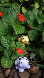 Gulliga grodor i trädgård Fotografering för Bildbyråer