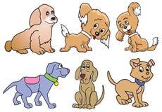 gulliga hundar några Royaltyfri Fotografi