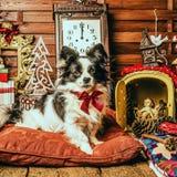 Gulliga hundjulklappar Royaltyfri Bild