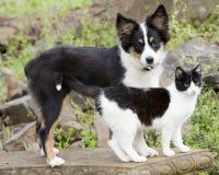 gulliga husdjur Arkivbilder