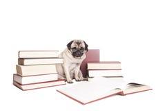 Gulliga intellektuella läseböcker för mopshundvalp och bärande läs- exponeringsglas som isoleras på vit bakgrund Royaltyfria Bilder