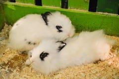 Gulliga kaniner i en bur på lantgården söta par royaltyfri bild