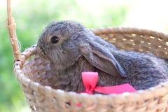 Gulliga kaniner utomhus Arkivfoton