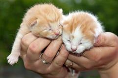 gulliga katter Arkivfoto