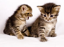 gulliga katter Royaltyfri Bild